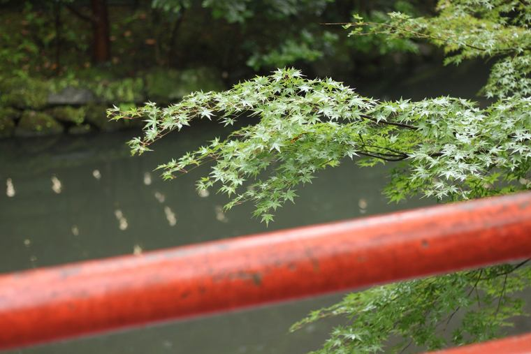鶴岡八幡宮 紅葉
