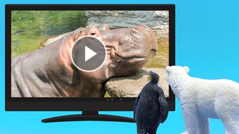 動画で楽しむ!全国のおすすめ動物園・水族館