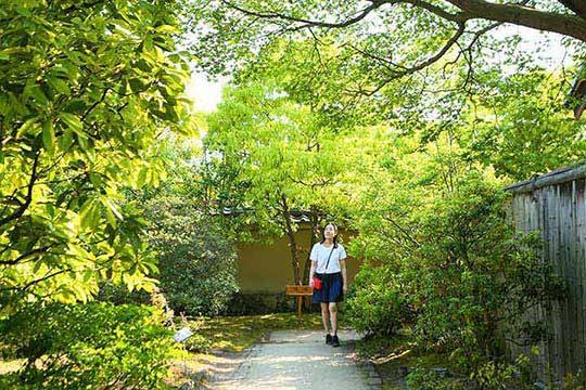 手入れの行き届いた庭園内には四季折々の木々や花が生い茂る
