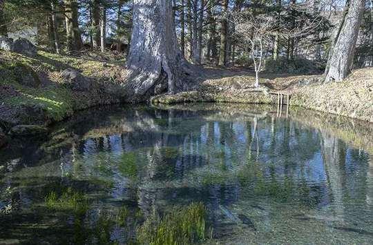 忍野八海 底抜池