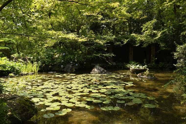 アサヒビール大山崎山荘美術館の睡蓮