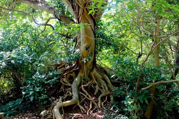 所狭しと植えられた常緑樹