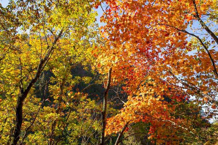 横谷渓谷 紅葉