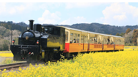 養老渓谷の絶景を巡る鉄道旅【前半:小湊鉄道と菜の花畑編】