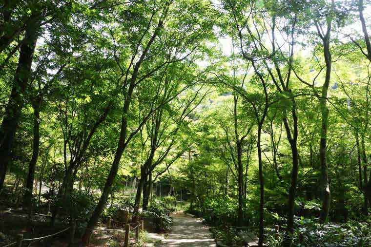 有馬温泉 紅葉の季節は瑞宝寺公園まで