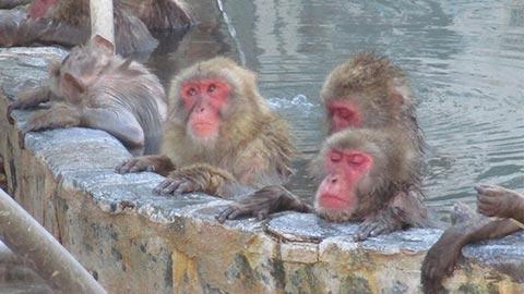 函館・湯の川温泉を散策!湯めぐりにグルメ、神社仏閣も