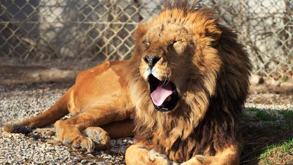 日本一の動物園は?全国の人気動物園ランキング