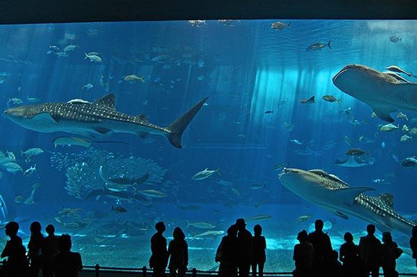 沖縄の海そのもの。「黒潮の海」水槽
