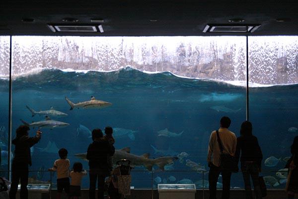 自然の荒波を再現した「波の大水槽」