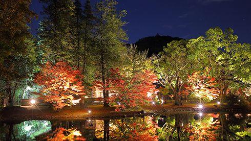 白水阿弥陀堂の紅葉ライトアップ
