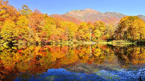 刈込池の秋
