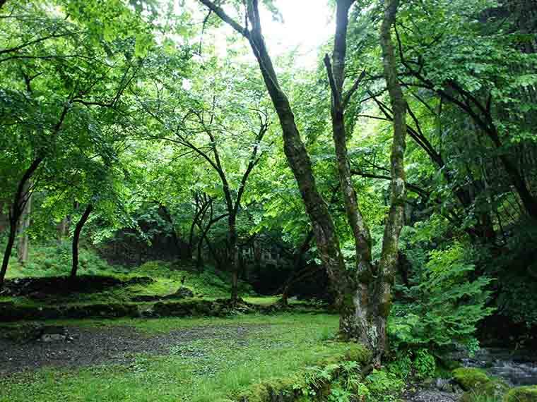 渓流そばで自然を満喫できる