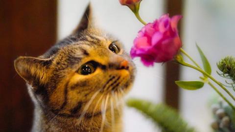 【2019年版】全国の宿 自慢の看板猫ランキング