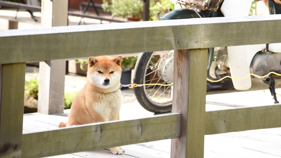 【2016年版】全国の宿 自慢の「看板犬ランキング」
