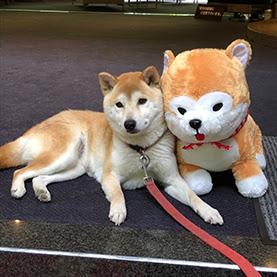 さくら(犬鳴山温泉 み奈美亭)