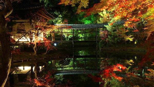 高台寺の紅葉(京都府)