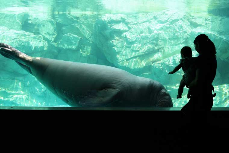 大分マリーンパレス水族館 「うみたまご」