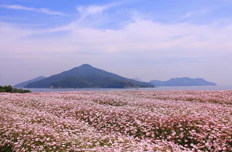 香川県 フラワーパーク浦島