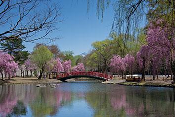 湯沢中央公園(桜の見頃:4月中旬~5月上旬)