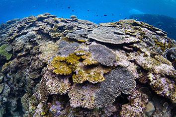 沖縄 南部のダイビングスポット
