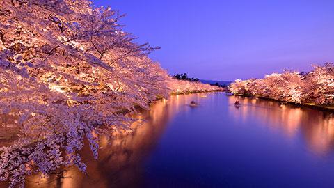 桜の名所・全国お花見スポットランキング!