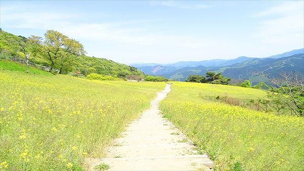 西条・新居浜・四国中央エリア(愛媛県)