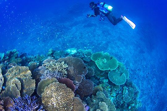 伊平屋島 ダイビングスポット