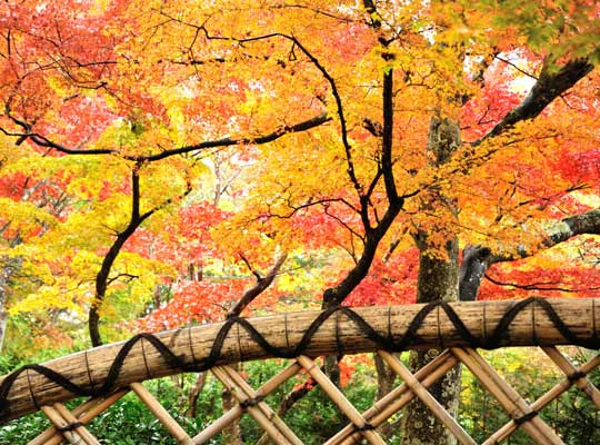 強羅温泉 箱根美術館の紅葉