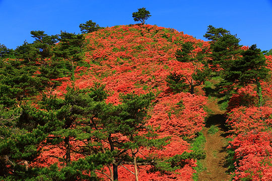 新緑の徳仙丈山