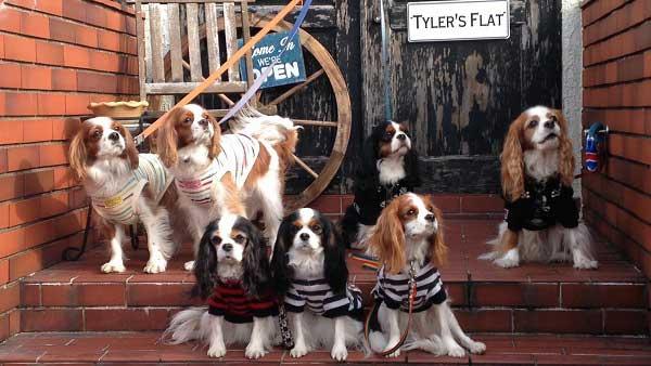 ワンちゃんと泊まれるブリティッシュスタイルのプチホテル Tyler's Flat-タイラーズフラット