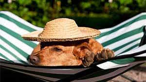 【2015年】ペットと泊まれる宿人気ランキングTOP10