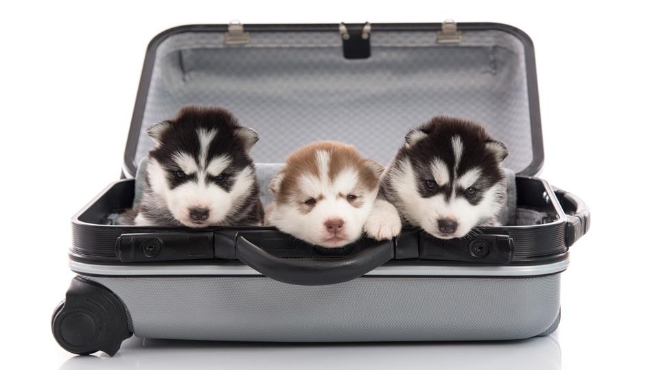 【2016年】ペットとの旅行におすすめ!ペットと泊まれる宿人気ランキング