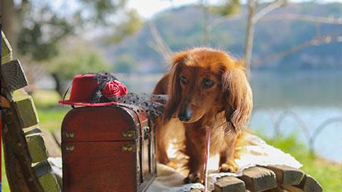【2019年】ペットとの旅行におすすめ!ペットと泊まれる人気宿ランキング
