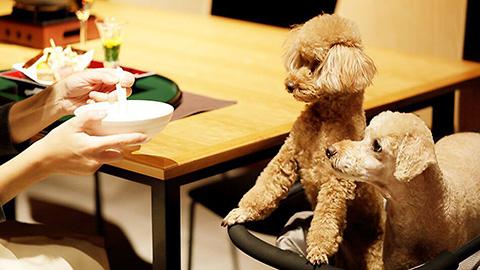 【長野】ペットと泊まれる人気の宿ランキング