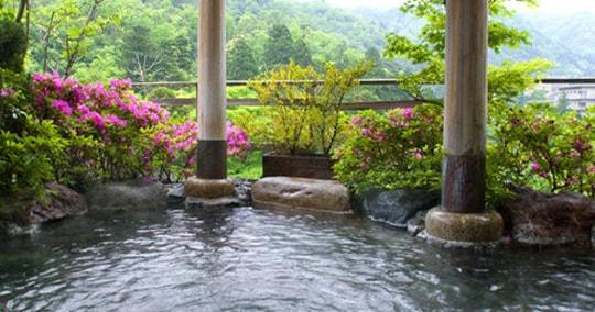 山中温泉 花紫
