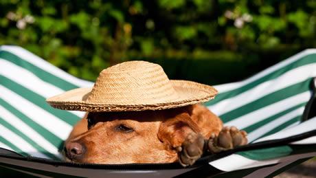 ペットと泊まれる宿人気ランキングTOP10