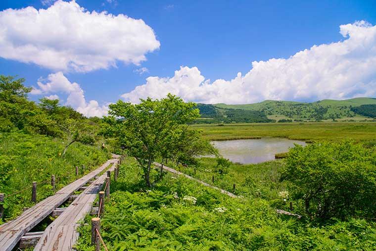 霧ヶ峰・八島湿原