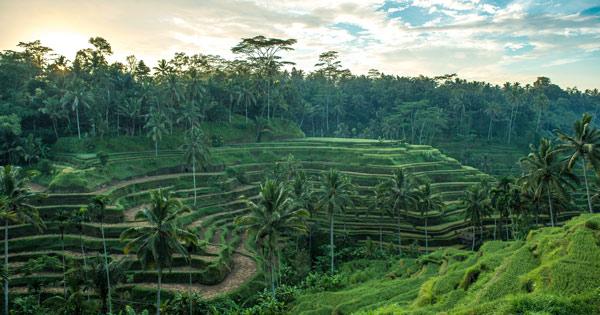 【おうちで海外気分】旅行ガイド:インドネシア・バリ島