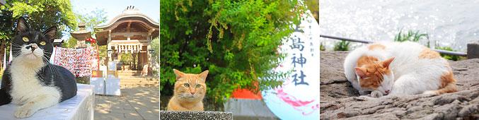 江の島のネコ