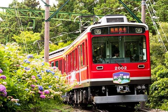 あじさい電車(箱根登山鉄道)