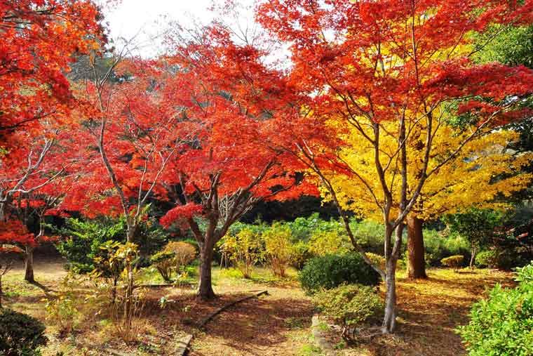 源氏山公園