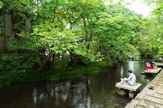 源兵衛川のせせらぎ散歩(水の苑緑地)