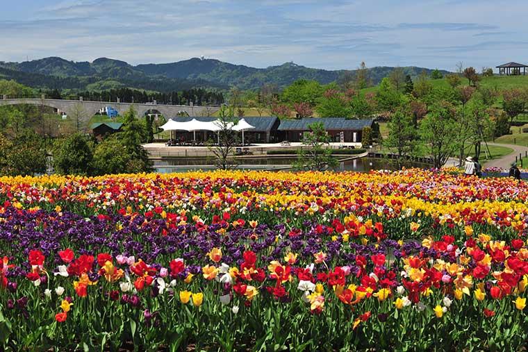 悠久山公園(ゆうきゅうざんこうえん)