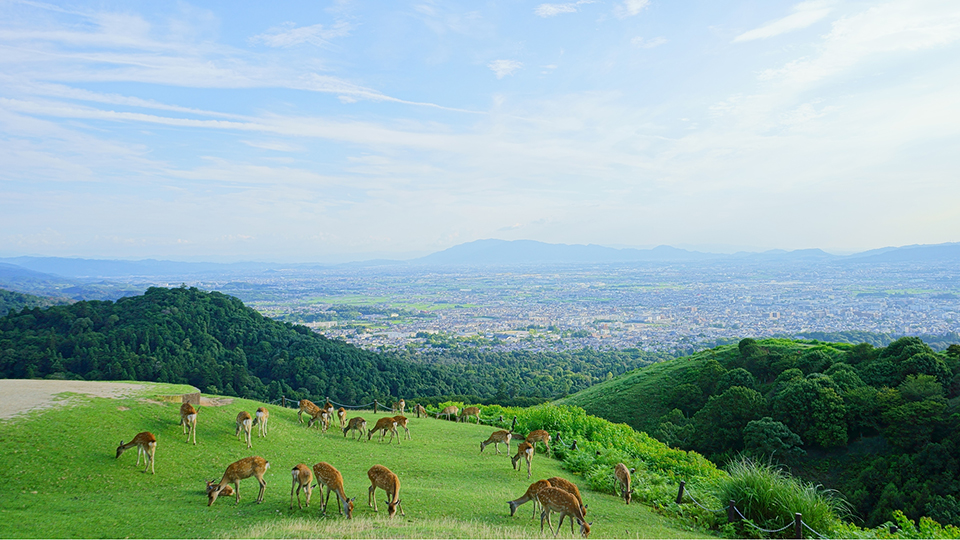 奈良県のおすすめ観光スポットBEST21