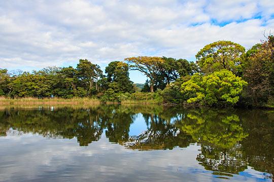 大瀬神社(神池&ビャクシン樹林)
