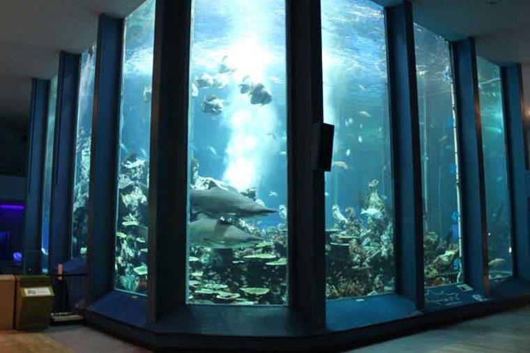 東海大学海洋化学博物館