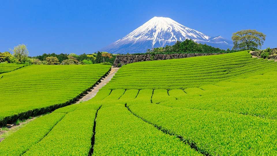 静岡県のおすすめ観光スポットBEST20