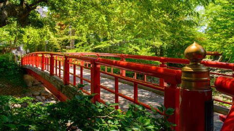 修善寺おすすめ観光スポット!竹林やグルメ、雨スポットも