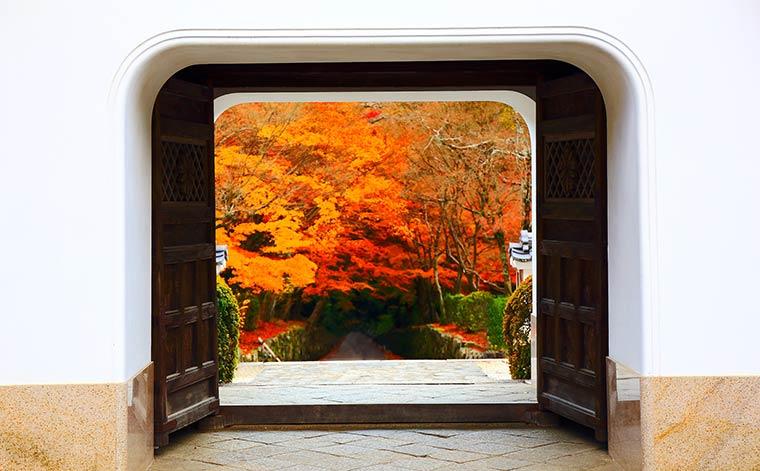 興聖寺 琴坂の紅葉