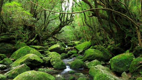屋久島のおすすめ観光スポット